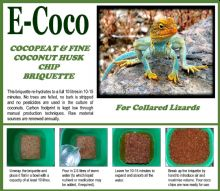 COLLARED LIZARD SOIL BRIQUETTES